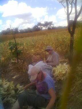 Moira and I helping with the maize crop last year